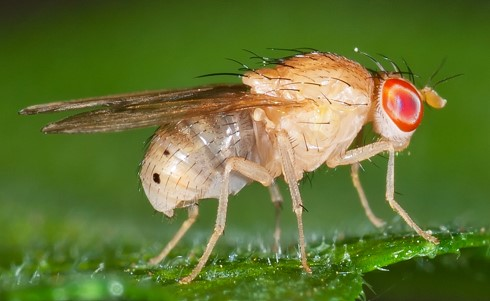 How To Get Rid of Fruit Flies In Plants Naturally At Home: 4 Easy Steps